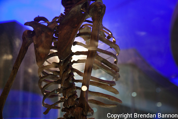 A human skeleton displayed at the Nairobi National Musuem (Photographer: Brendan Bannon)