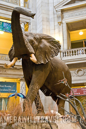 elephant in smithsonian natural history museum washington dc smithsonian natural history museum washington h213130807 Smithsonian National Museum of Natural History