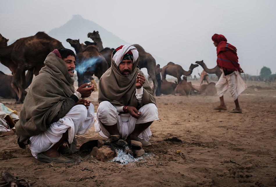 PUSHKAR, INDIA - CIRCA NOVEMBER 2016: Camel herders smoking early morning in the Pushkar Camel Fair grounds. It is one of the world's largest camel fairs. Apart from the buying and selling of livestock, it has become an important tourist attraction. (Daniel Korzeniewski)