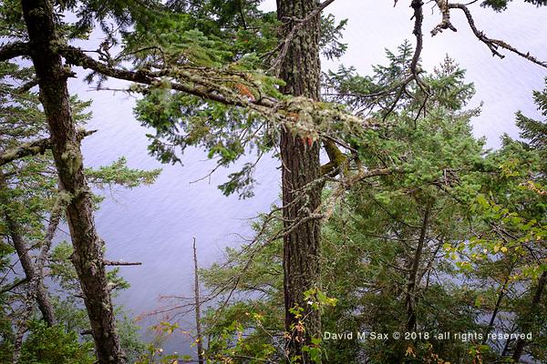 8.25.18 - Through The Trees.... (DAVID M SAX)