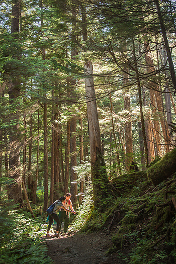 US Forest service employees lead a hike on Indian River Trail during the Sitka Arts and Science Festival. (Clark James Mishler)