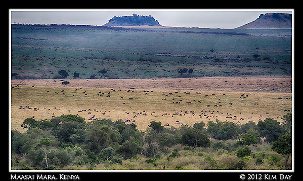 Wildebeest Far As The Eye Can See.Maasai Mara, Kenya.September 2012 (Kim Day)