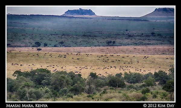 Wildebeest Far As The Eye Can See.Maasai Mara, Kenya.September 2012 (Kim Day)