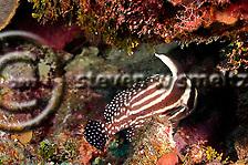 Cemetery Reef, Grand Cayman (StevenWSmeltzer.com)