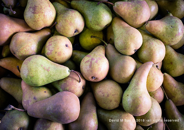 9.21.18 - Mingling Pears... (© David M Sax 2018 - all rights reserved)