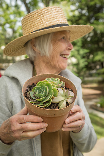 Volunteer Pat Haynes arranges plants at the Calistoga Garden Club annual yard sale on Washington Street in Calistoga. (Clark James Mishler)