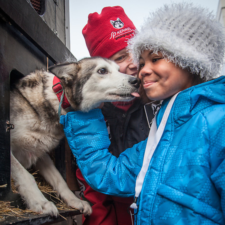 A young enthusiast gets a kiss from one of Ali Zerkel's dogs before the Ceremonial start of the 41st Iditarod, Fourth Avenue, Anchorage, Alaska (Clark James Mishler)