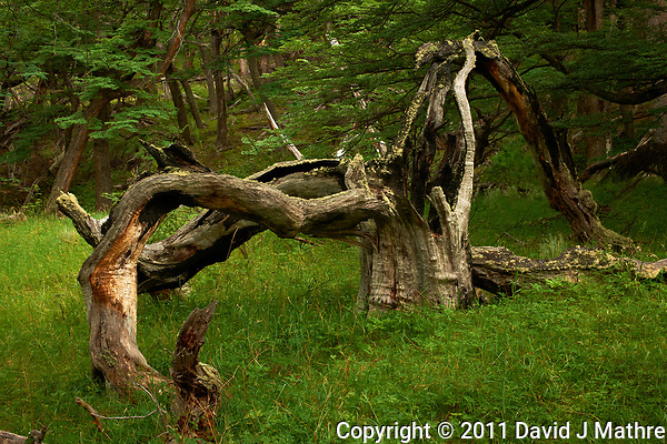 Remains of a Tree Struck by Lightning in Patagonia. Hike from Hosteria El Pilar in El Chalten to El Mirador and Laguna Torre. Image taken with a Nikon D3x and 50 mm f/1.4G lens (ISO 100, 50 mm, f/11, 1/8 sec). (David J Mathre)