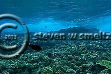 Coral Reefs (Steven W Smeltzer)