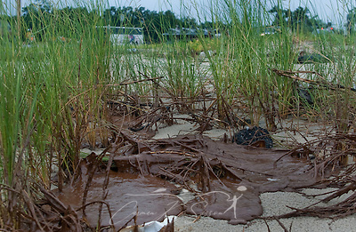 Oil from the Deepwater Horizon explosion accumulates in the grass beside the Ken Combs Pier in Gulfport, Miss. June 30, 2010. Mississippi had been largely spared from the effects of the Deepwater Horizon oil rig explosion April 20, 2010, but winds from Hurricane Alex began pushing oil ashore earlier this week, affecting beaches from Biloxi to Pass Christian.(Photo by Carmen K. Sisson/Cloudybright) (Carmen K. Sisson/Cloudybright)