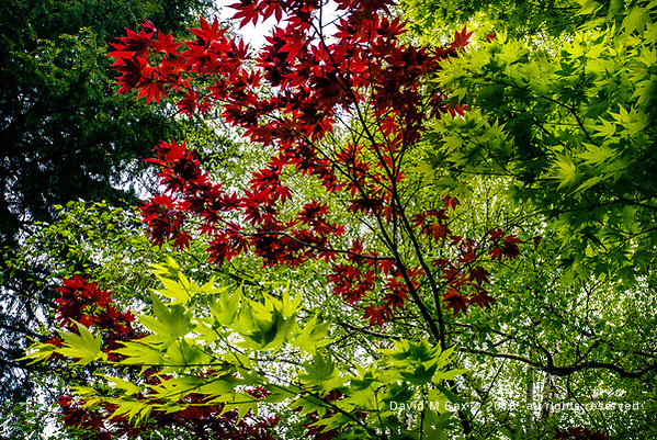 5.1.17 - Layers of Green and Red... (© David M Sax 2017 - all rights reserved)