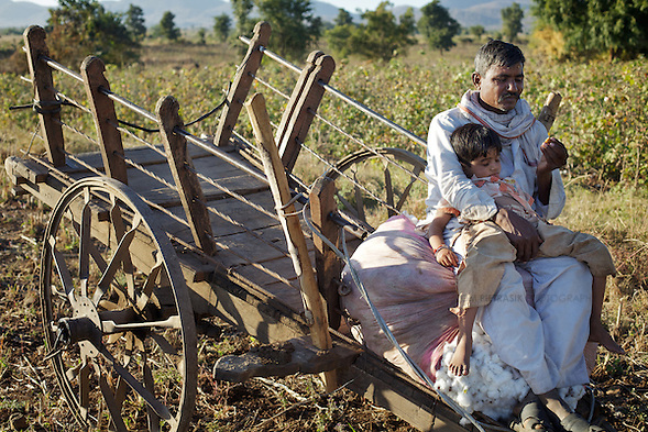 A boy takes an afternoon sleep on the lap of a cotton-farmer close to the village of Chitalwadi in the Vidarbha region of Maharashtra...Photo: Tom Pietrasik.January 2011.Maharashtra, India (Tom Pietrasik)