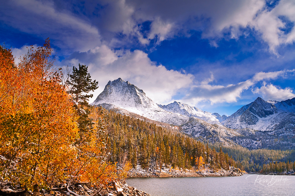 Fall aspens under Sierra peaks from South Lake, John Muir Wilderness, California