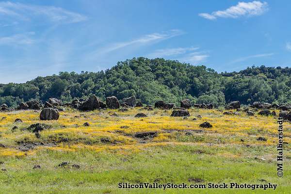 Unusually Green Landscape of California near Gilroy, California (M Halberstadt/SiliconValleyStock.com)
