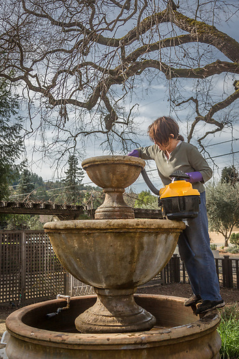"""I clean this every two months or so.  As far as things to do in the yard, this is my least favorite...I'd rather be digging in the dirt.""  -Lana Richardson cleans the fountain in her yard on South Oak Street in Calistoga. (Clark James Mishler)"