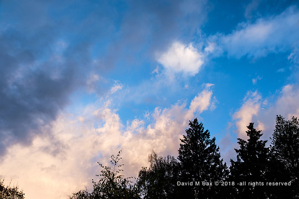 11.2.18 - Morning Clearing.... (© David M Sax 2018 - all rights reserved)