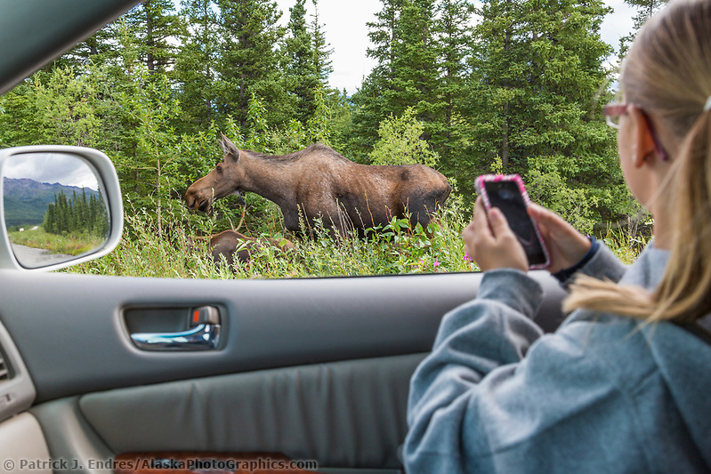 Young girl watches a cow moose browse on fireweed along the road in interior, Alaska. (Patrick J. Endres / AlaskaPhotoGraphics.com)