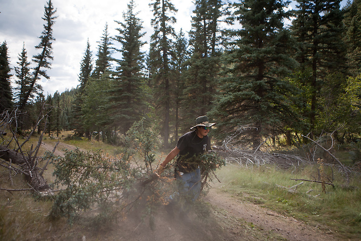 A worker carries a newly removed tree on a dirt road in the Valles Caldera. Santa Clara Pueblo has received $6,513,000 in stimulus funds to promote healthy forests and reduce hazardous fuels.. (Steven St. John)