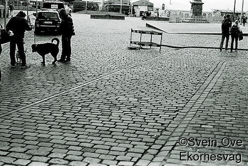 Lufting av hunder på en brosteinbelagt sgate i Bergen. Foto: Svein Ove Ekornesvåg (1996-2001 AccuSoft Co., All rights reserved/Svein Ove Ekornesvåg)