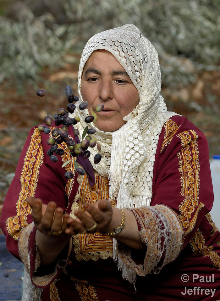 A Palestinian woman winnows olives during the yearly olive harvest in the West Bank town of Turmus'ayya. She throws the olives in the air and the wind blows the leaves away. Olives play a central role in the traditional Palestinian diet and economy.