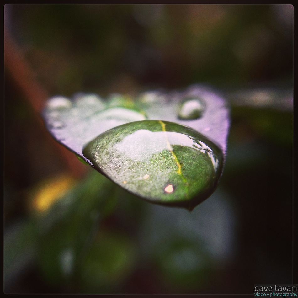 A drop of water sits on a leaf on another cloudy day in Philadelphia on January 16, 2013. (Dave Tavani)