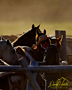 Wyoming Cowboy saddling horses for the days work (© Daryl L. Hunter - The Hole Picture/Daryl L. Hunter)