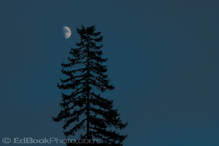 Half Moon and lone Douglas Fir tree (Pseudotsuga menziesii) (Ed Book)