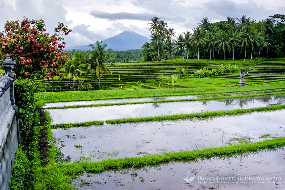 Bali, Tabanan, Kerambitan. Gunung Batukau seen from Kerambitan. Usually the mountain is covered by clouds. (Photo Bjorn Grotting)