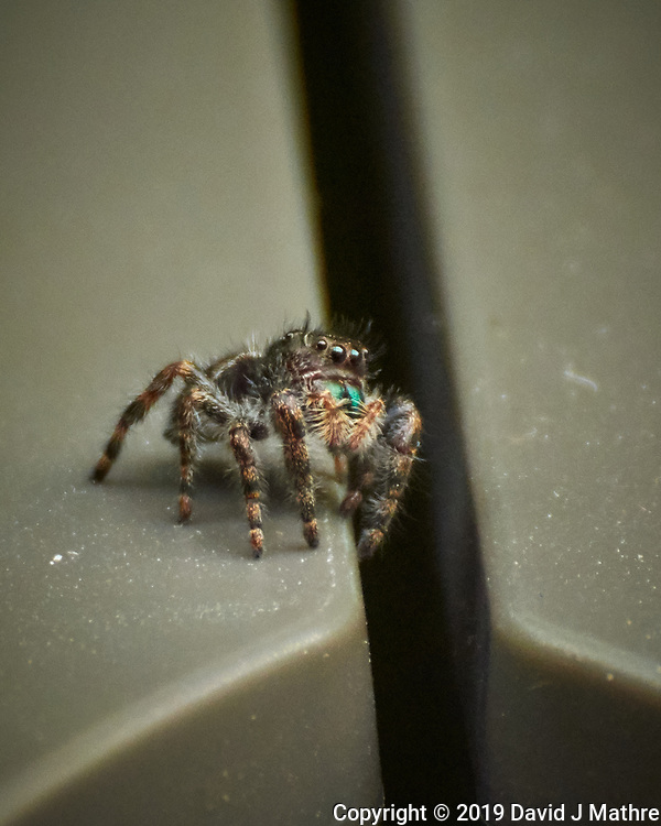 Spider. Image taken with a Nikon 1 V3 camera and 70-300 mm VR lens (ISO 400, 300 mm, f/5.6, 1/320 sec). (DAVID J MATHRE)