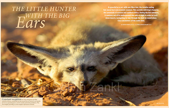 Magazine GEOinternational No. 05/2012, publishes Solvin's story on Bat-eared fox (Otocyon megalotis) (Solvin Zankl)