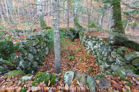 Abandoned cellar hole at Thornton Gore in Thornton, New Hampshire during the autumn months.