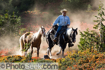 A mounted horse wrangler leads a spare horse down the dusty Park Butte Trail, Mount Baker Wilderness, Washington.