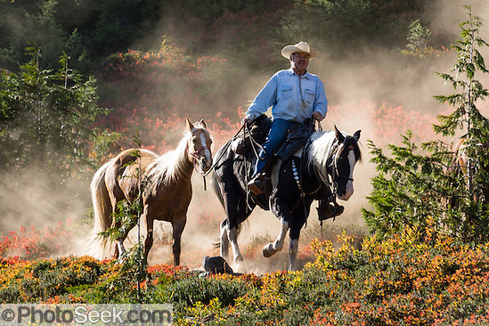 Horse wrangler on dusty Park Butte Trail, Mount Baker Wilderness, Washington, USA.
