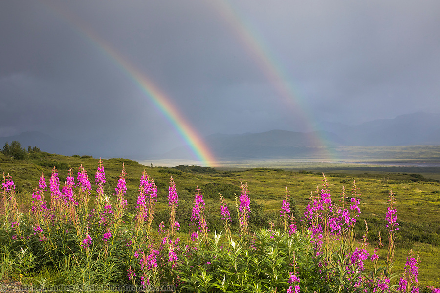 Dark storm clouds and rainbow over the tundra, Denali National Park, Alaska (Patrick J Endres / AlaskaPhotoGraphics.com)