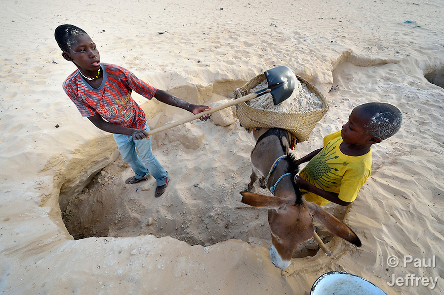 Boys harvest clean desert sand, loading it on donkeys for transport to construction sites in Timbuktu, the northern Mali city captured by Islamist forces in 2012 and liberated by French and Malian soldiers in 2013. (Paul Jeffrey)