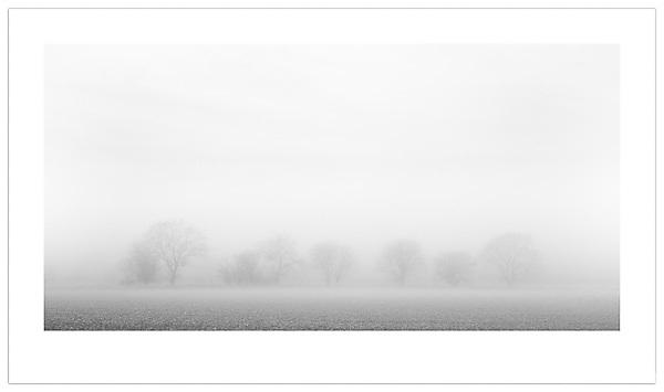 Trees in Mist - Isle of Funen, Denmark (Ian Mylam/© Ian Mylam (www.ianmylam.com))
