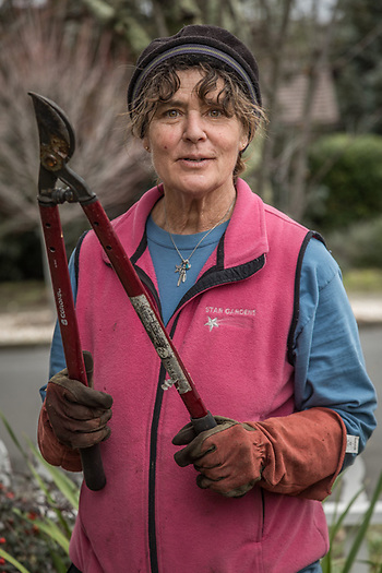 Middletown resident and owner of Star Garden Nursery, Tanya Striedieck, prunes trees in the yard of a home on the corner Cedar and South Oak Streets in Calistoga.  stargar@sonic.net (© 2017 Clark James Mishler)