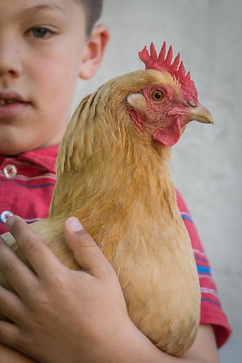 Andreas Bjokman with his chicken, Calistoga (Clark James Mishler)