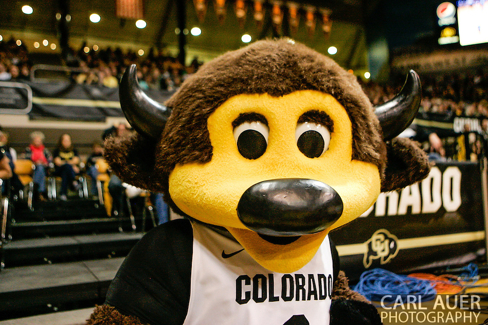 November 16th, 2013:  Chip Buffallo during the second half of the NCAA Basketball game between the Jackson State Tigers and the University of Colorado Buffaloes at the Coors Events Center in Boulder, Colorado (Carl Auer/ZUMAPRESS.com)