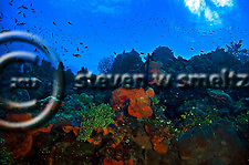 West Wall Ecosystem Orange Canyon Grand Cayman (Steven Smeltzer)