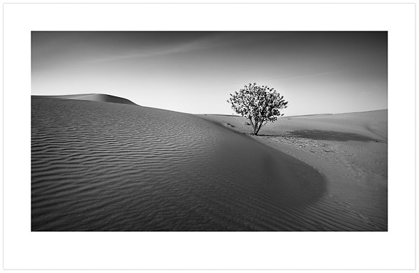 Tree in the Desert - U.A.E. 2014  (© Ian Mylam)