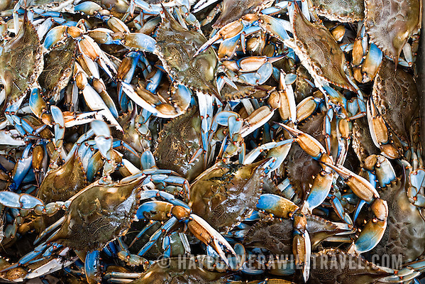 Maine Avenue Fish Market Blue Crabs from the Chesapeake Bay j233161153