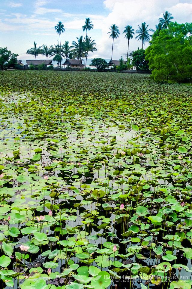 Bali, Karangasem, Candidasa. A freshwater lagoon full of lotus flowers beneath the temple. (Photo Bjorn Grotting)