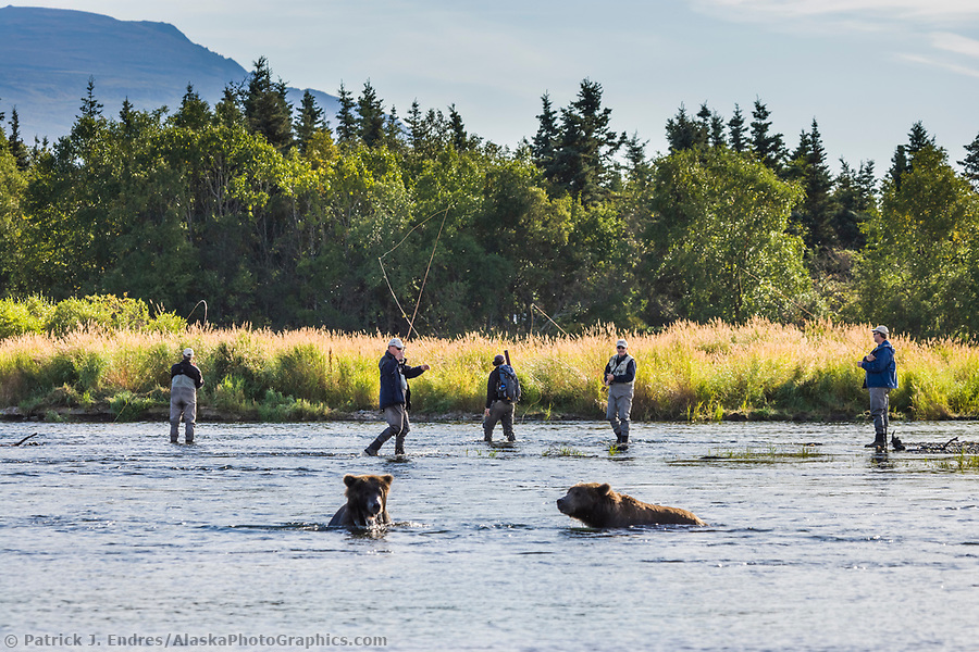 Fly fishing in the Brooks river with the brown bears, Katmai National Park, southwest, Alaska. (Patrick J. Endres / AlaskaPhotoGraphics.com)