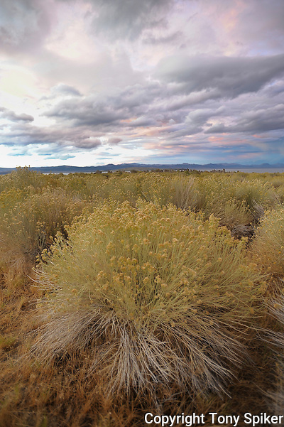 &quot;Sagebrush at Mono Lake&quot; - A photograph of a storm clearing over Mono Lake at sunset. (Tony Spiker)