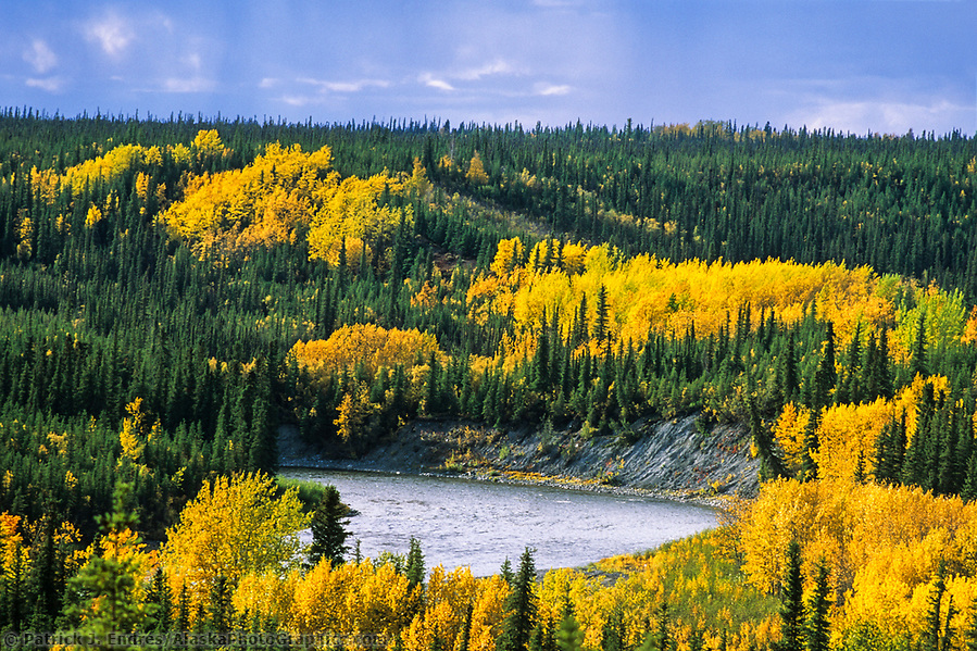 Gulkana river, autumn colored birch and aspen trees, Alaska (Patrick J. Endres / AlaskaPhotoGraphics.com)