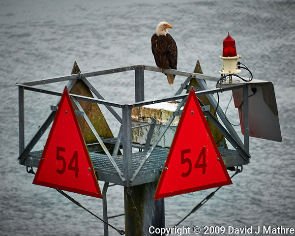 Bald Eagle on Channel Marker 54 From the deck of the MV Columbia (Alaska Marine Highway). Image taken with a Nikon D3x camera and 70-300 mm VR lens (ISO 400, 280 mm, f/5.6, 1/60 sec). (David J Mathre)