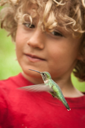 Eight year old Owen feeds hummingbirds in the mountains above Fort Collins, Colorado  tomrifsmi@comcast.net (© Clark James Mishler)