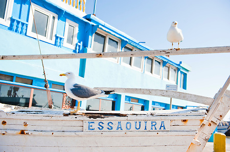 Photo of seagulls on a boat with a sign saying Essaouira in Essaouira Fishing Port, Morocco, North Africa. Essaouira is famous for its thousands of seagulls that dominate the skies in the fishing port.