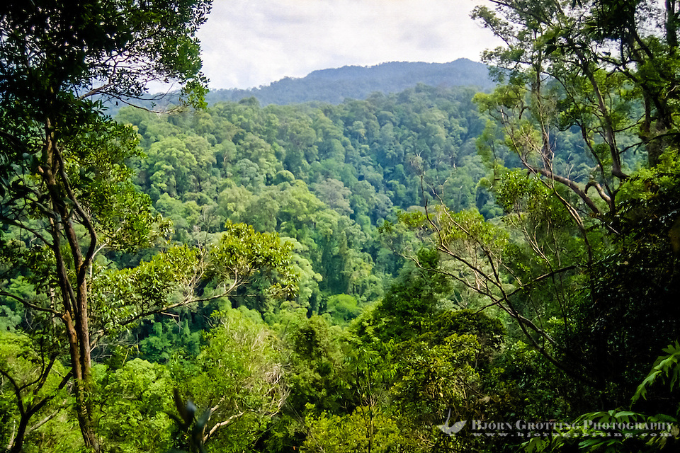 Indonesia, Sumatra. Bukit Lawang. Gunung Leuser nasjonalpark. Typical orangutan territory, tropical rainforest. (Photo Bjorn Grotting)